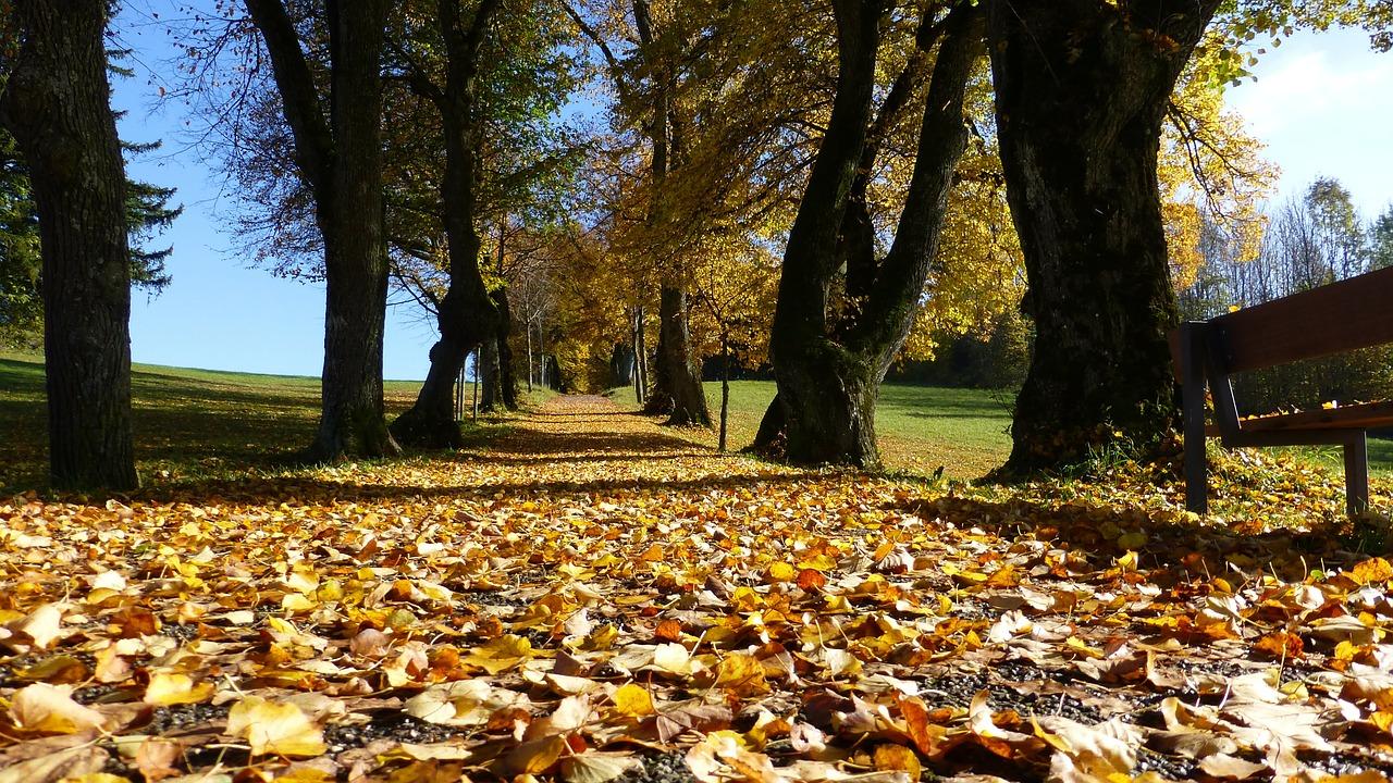 bladeren opruimen of laten liggen?