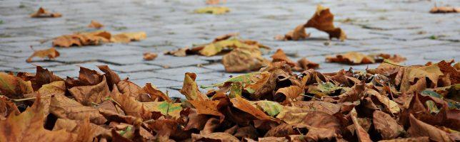 bladeren opruimen of niet tips
